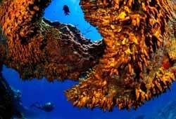 Tenerife participa en el proyecto Seafuel para buscar combustibles a partir del agua de mar
