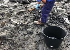 Gestión del Medio Natural extrae 36 toneladas de piche de la costa protegida del Malpaís de Güímar